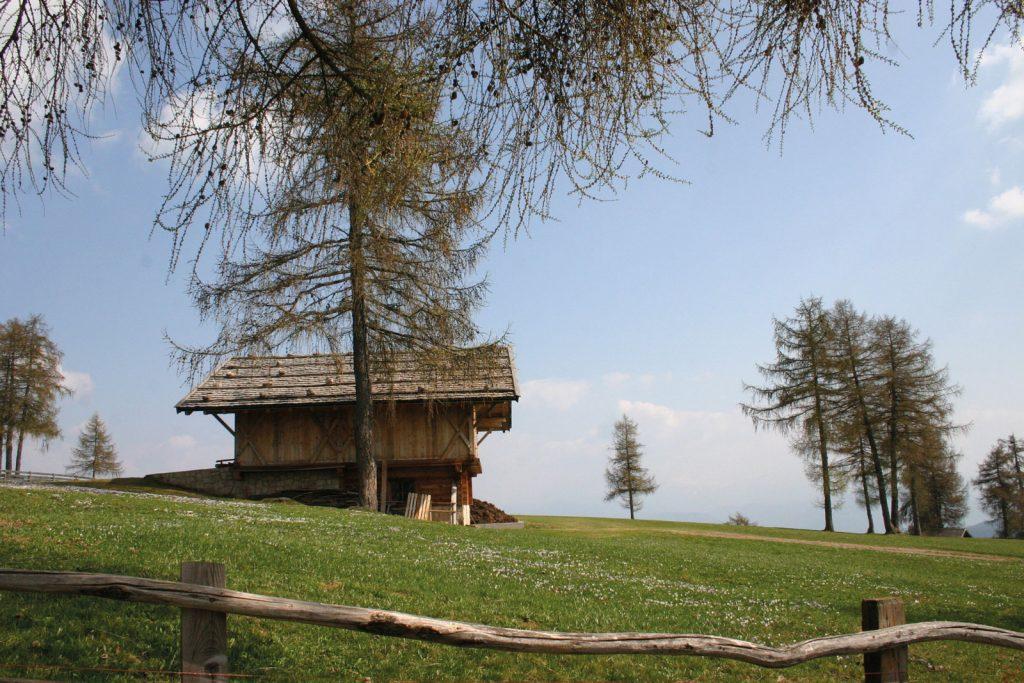 malga di meltina alto adige con capanna con tetto di scandole spaccate