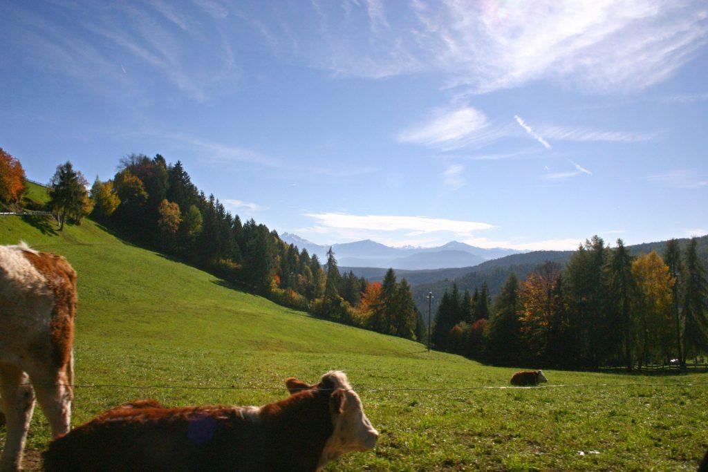 valas san genesio salto in autunno con mucche