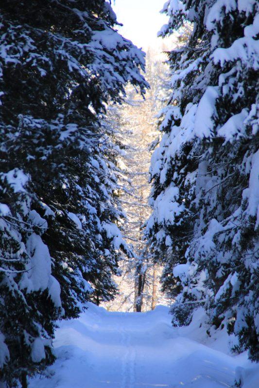 winter weg mit bäumen schnee südtirol