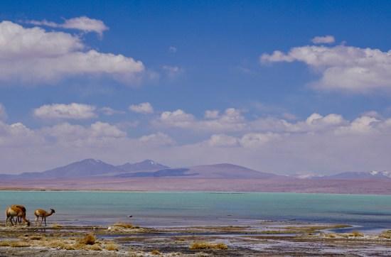 Sucre, Salar et Sud Lipez - Laguna Chalviri 2