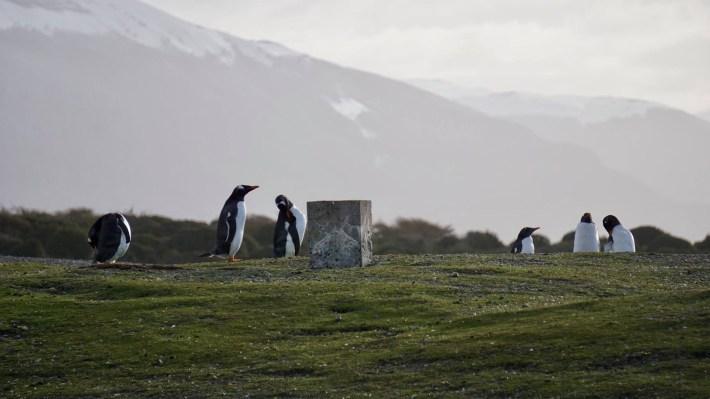 Descente au bout du monde - Pingouins