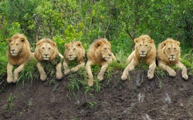 """Newly-established """"Serengeti of Southern Tanzania"""""""