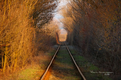 Tunelul ibirii din CS-1