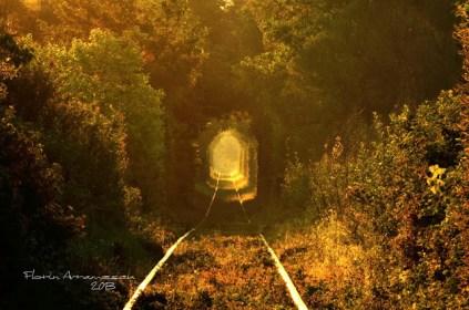 Tunelul ibirii din CS-6