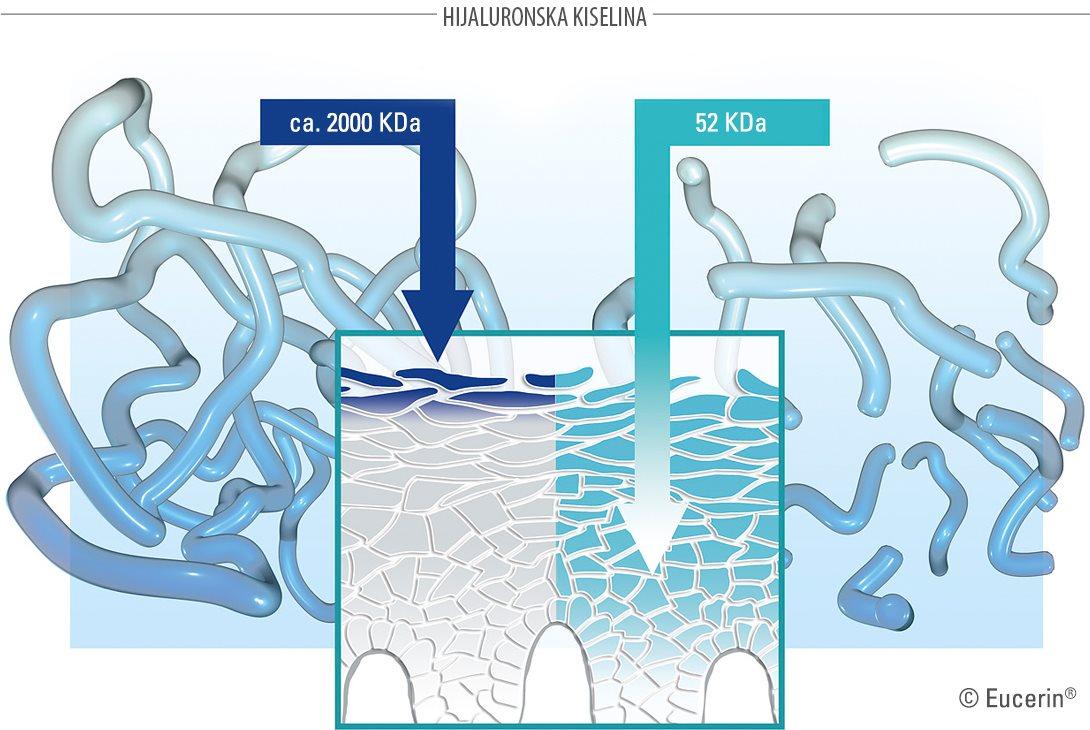 Način delovanja Eucerin Hyaluron-Filler Koncentrata