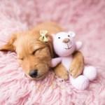 newborn pets