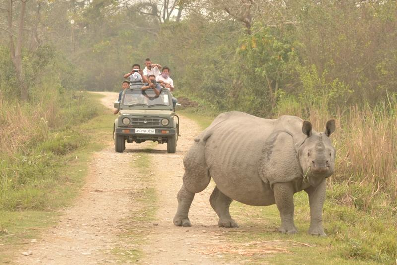 Le parc national de Kaziranga