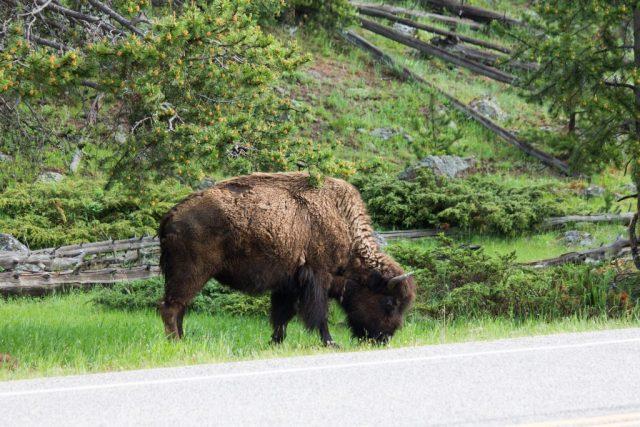 2016-06-10 Yellowstone-55