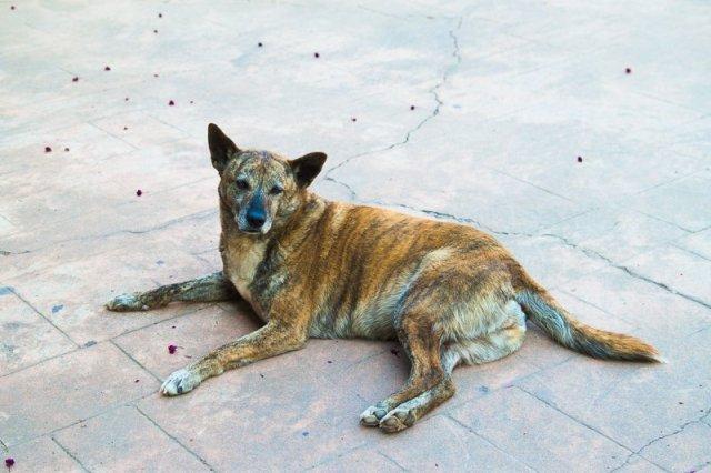 Pet dog at fon chin homestay, julie's garden minsu