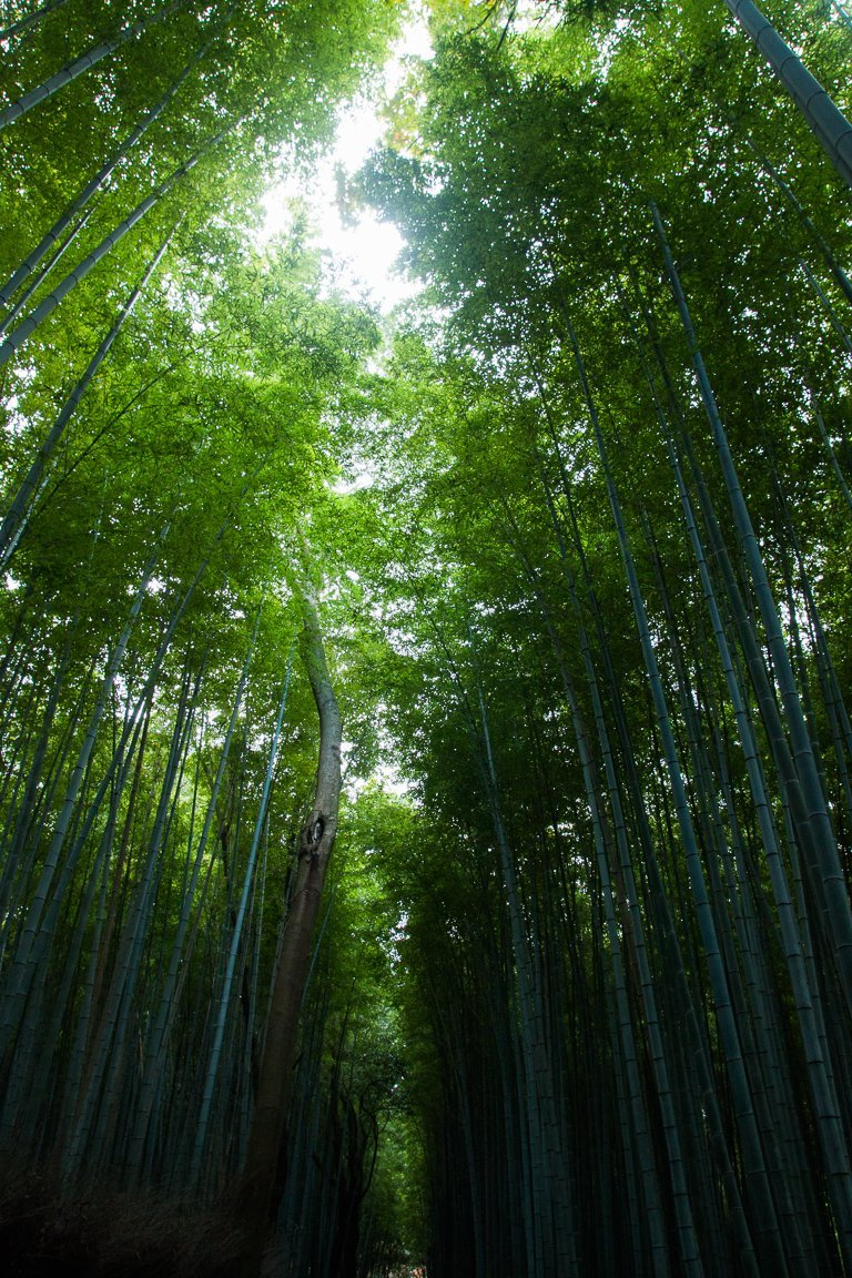 10-day japan itinerary arashiyama bamboo forest kyoto