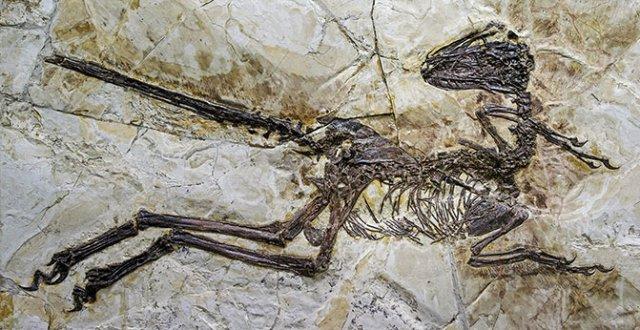 INCRIVEL Pesquisadores encontram o maior dinossauro com asas 2