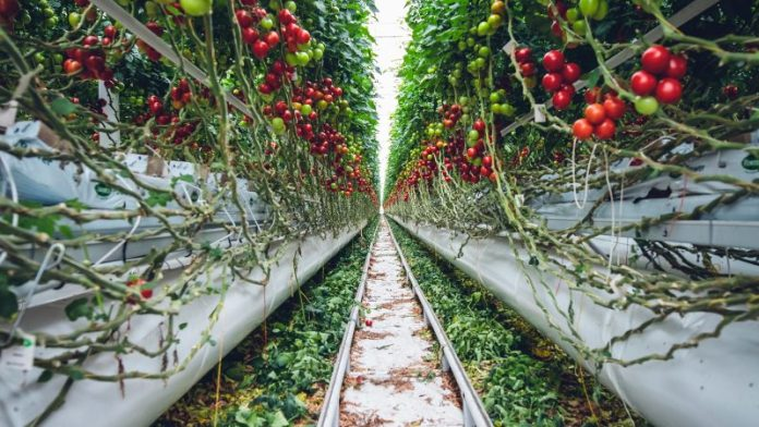 The impact of the new CAP on organic farming – EURACTIV.com
