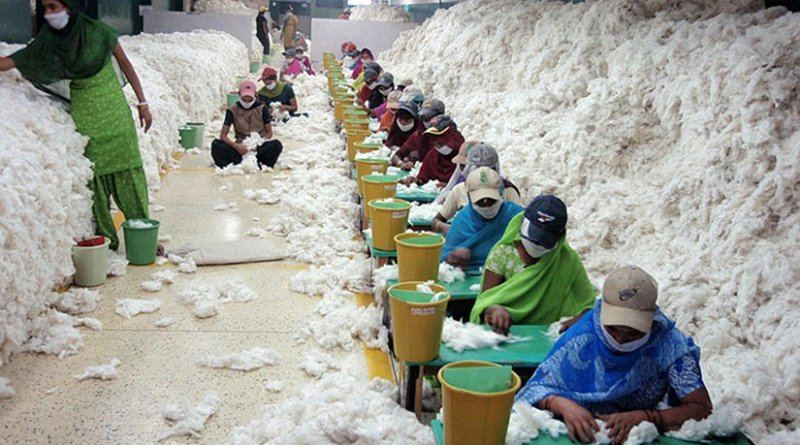 Manually decontaminating cotton before processing at an Indian spinning mill. Photo Credit: CSIRO, Wikipedia Commons.