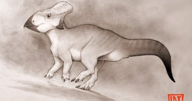 This is an illustration of the ceratopsian dinosaur from the Late Cretaceous period of eastern North America Credit Dr Nick Longrich