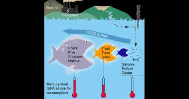 Mercury in the food chain. Graphic by Bretwood Higman, Ground Truth Trekking, Wikipedia Commons.