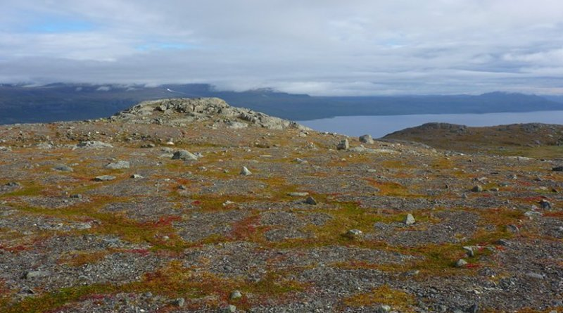 Circles of soil surrounded by vegetation formed above the tree line in the Swedish mountains when the ground moves due to the soil freezing and thawing. Credit: Marina Becher