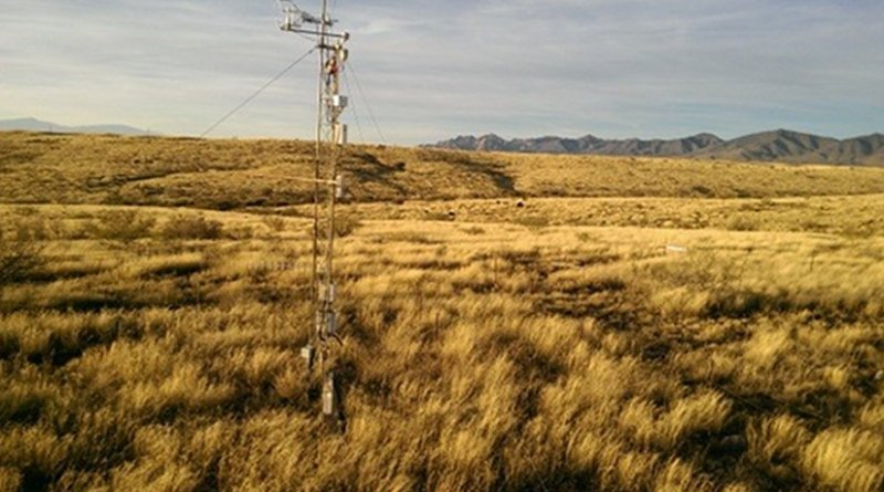 Kendall Grassland in southeastern Arizona is one of many sites in the research project. Credit R.L. Scott, USDA-ARS