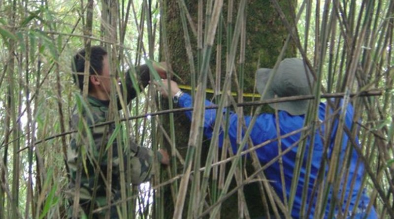 Two technicians in China's Wolong Nature Reserve measure tree growth to chart forest recovery. Credit Michigan State University Center for Systems Integration and Sustainability