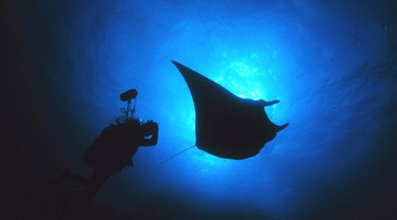 An underwater photographer gets close to a manta ray in Flower Garden Banks National Marine Sanctuary in the northern Gulf of Mexico near the Texas-Louisiana border. Credit NOAA