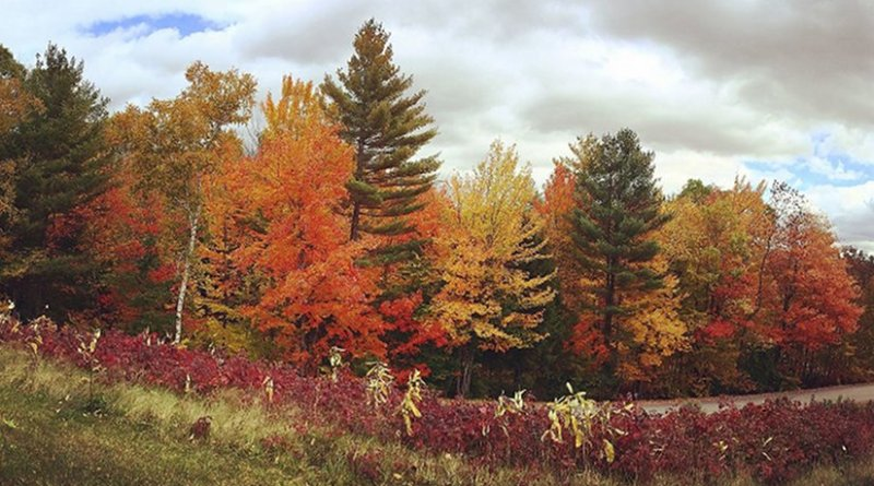 Photograph of Hubbard Brook Experimental Forest by photographer Mariel Carr, CHF Videographer, Wikimedia Commons.