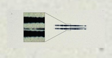 """The 1917 photographic plate spectrum of van Maanen's star from the Carnegie Observatories' archive. The pull-out box shows the strong lines of the element calcium, which are surprisingly easy to see in the century old spectrum. The spectrum is the thin, (mostly) dark line in the center of the image. The broad dark lanes above and below are from lamps used to calibrate wavelength, and are contrast-enhanced in the box to highlight the two """"missing"""" absorption bands in the star. Credit The Carnegie Institution for Science"""