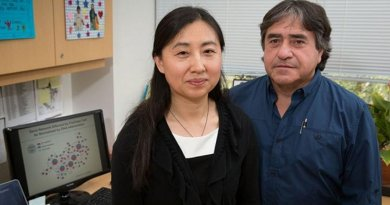 Xia Yang and Fernando Gomez-Pinilla observed the remarkable finding that after genes are altered by fructose, DHA seems to push the entire gene pattern back to normal. Credit Reed Hutchinson/UCLA