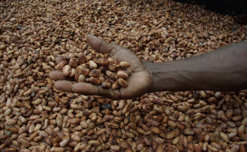 Cocoa beans drying in the sun. Photo by Irene Scott/AusAID, Wikipedia Commons.