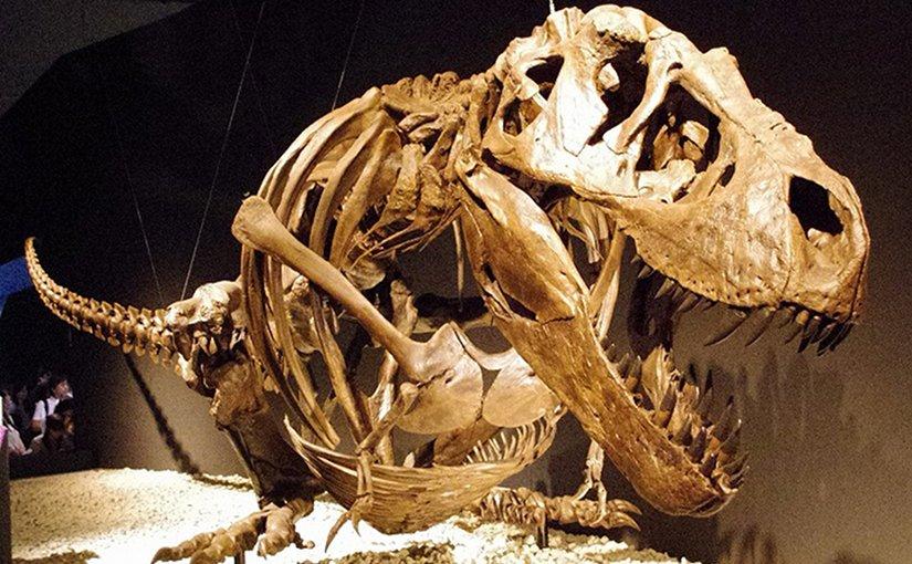 Skeleton of Tyrannosaurus rex. Photo by ssr ist4u, Wikipedia Commons,