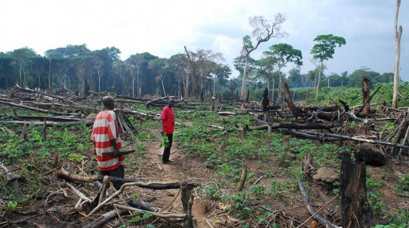 A recently burnt-down patch of forest in the vicinity of Yangambi in the central Congo Basin. In the background is the edge of the primary forest. The owner has planted a range of crops, including cassava and maize. Credit © KU Leuven - Pieter Moonen