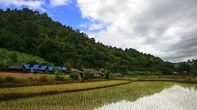 Rice plantation in Thailand. Photo by Martin-Manuel Beaulne, Wikipedia Commons.