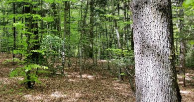 Mixed forests help to minimise the risk of deminishing certain forest functions. Photo: Peter Brang (WSL)