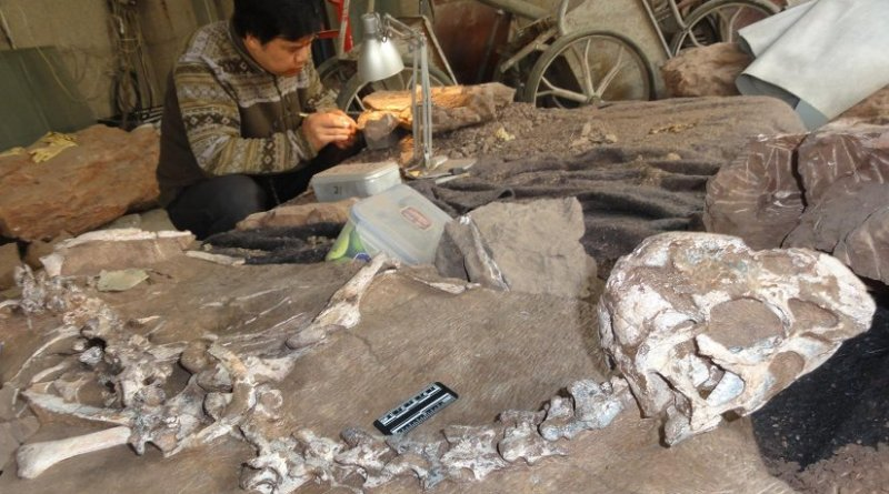 A well preserved fossil of a new species of winged dinosaur, known as Tongtianlong or Mud Dragon, is giving scientists vital clues on a late flurry of evolution before the mass exctinction event. Credit Junchang Lu
