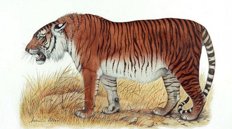 his is an artist's depiction of a Caspian tiger. Credit Heptner and Sludskiy 1972