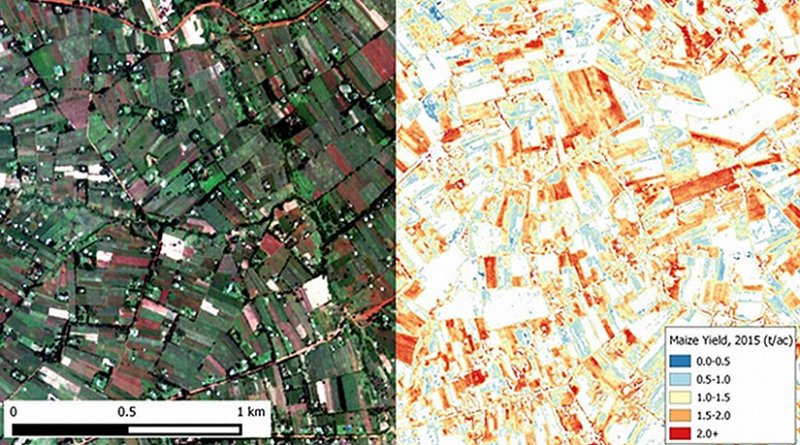 Image of maize farm plots in Western Kenya were taken by Terra Bella satellites (left) and an agricultural yield map (right) generated from the same image using machine learning algorithms. Credit Image courtesy of David Lobell.