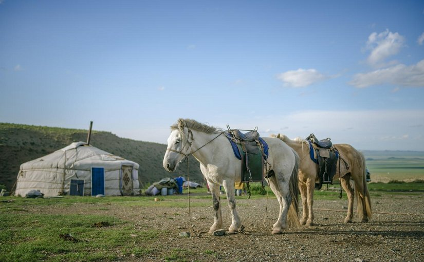 Domestic horses form the center of nomadic life in contemporary Mongolia. Credit Photo: P. Enkhtuvshin
