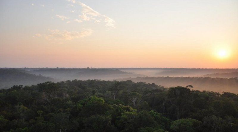 This is a photo of the Amazon forest taken from an eddy co-variance tower near Manaus, northwestern Brazil. Credit Xi Yang/University of Virginia