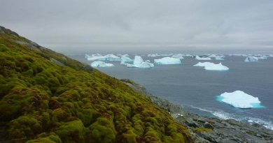 This is a Green Island moss bank with icebergs. Credit Matt Amesbury