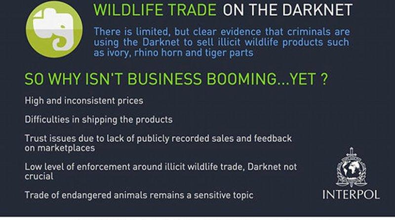 Wildlife trade on the Darknet. Source: INTERPOL