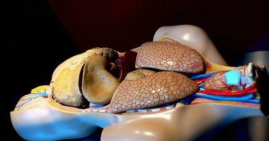 human heart lungs anatomy