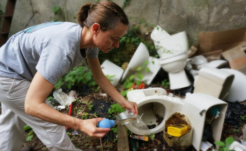 Senior author Shannon LaDeau samples pools of water collected in discarded trash for mosquito breeding activity. Credit BES Photo Archive