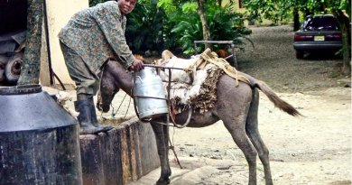 Man getting milk in Dominican Republic.