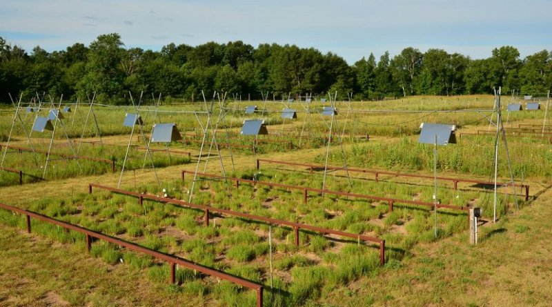 The meadow plots were part of the Long-Term Ecological Research Station in Cedar Creek, Minnesota, USA. The heating lamps placed above the meadows heated the meadow to approx. 3 degrees Celcius above the ambient temperature. Credit Jacob Miller