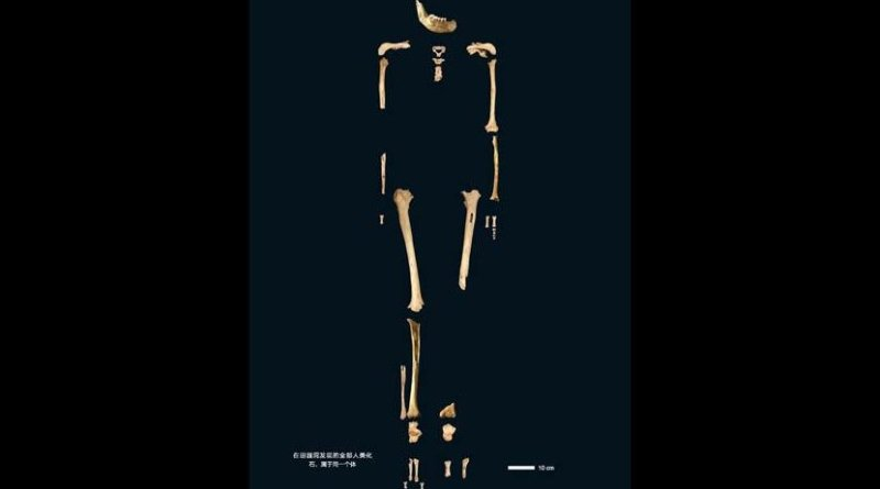 This is a skeleton of the 40,000-year old Tianyuan Cave man. Credit Image by FU Qiaomei