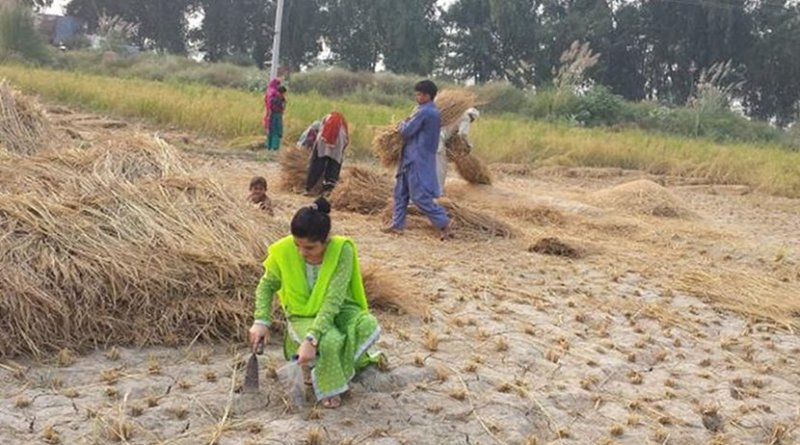 These are researchers taking soil samples in Pakistan. Credit: F Quaid-i-Azam University