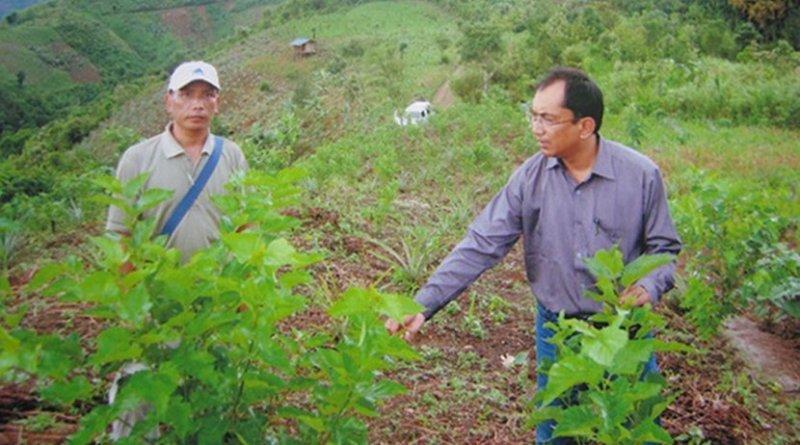 Sericulture farm in Mizoram