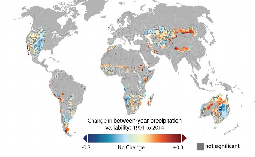 Overall, both within and between-year precipitation variability has been increasing for global grazing lands. This map shows the changes in between-year variability: Of the total land area considered pasture in this analysis, 20 percent did not experience significant changes (in gray), while 31 percent experienced significant decreases (cool colors) and 49 percent experienced significant increases in precipitation variability (warm colors). Credit Nature Climate Change