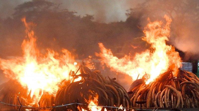 Ivory burn event in Kenya. Credit David Stiles