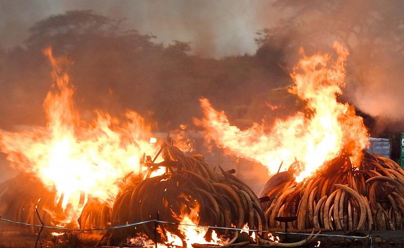 Ivory burn event in Kenya. Credit David Stiles