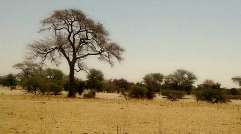 This photo, taken outside the town of Diakhao, Senegal in March of 2018, illustrates the conditions of the Sahel during the dry season. The Sahel is the transition zone that lies south of the Sahara Desert, and fluctuates between very dry, desert-like conditions and wetter, more temperate conditions every year. Expansion of the Sahara is putting pressure on Sahel communities, such as Diakhao, that rely on seasonal increases in rainfall during the wet season. Credit Mamadou Faye/courtesy Wassila Thiaw, NOAA CPC.