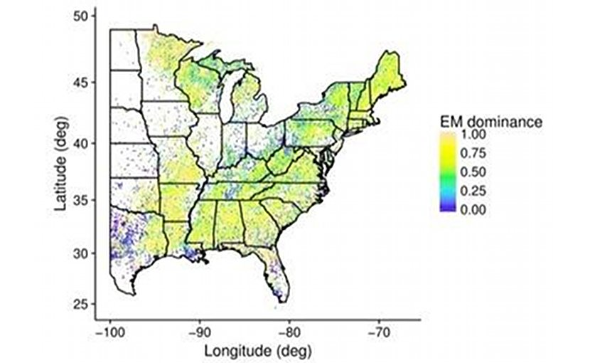 This map shows the distribution of 'EM dominant' trees across forest inventory plots in the eastern United States. Credit Kai Zhu